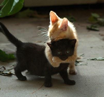 kitten-no-hug